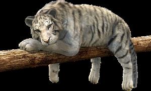 tiger-528890_640